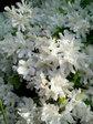 flower0425.jpg